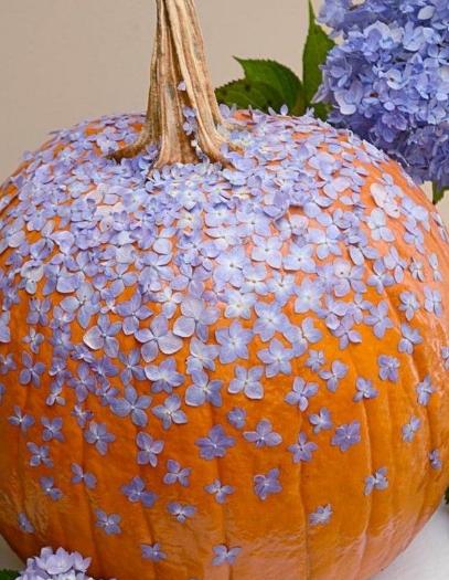 çiçekli bal kabağı