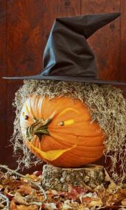 cadı bal kabağı