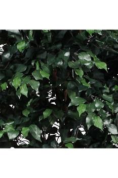 Plastik Yapay Ficus Ağacı Yeşil Renk 240cm 1 Adet - Thumbnail