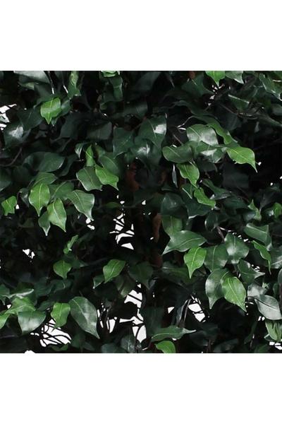Plastik Yapay Ficus Ağacı Yeşil Renk 240cm 1 Adet