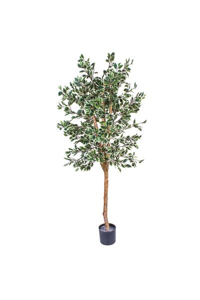 Yapay Ficus Variegated Ağacı 210cm 1 Adet
