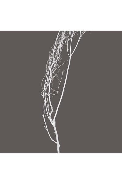 Doğal Beyaz Boyalı Kuru Tanzim Dalı 190CM 1 Adet