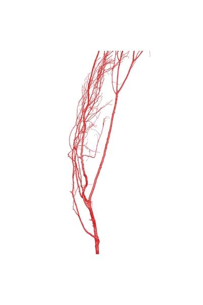 Doğal Kırmızı Boyalı Kuru Tanzim Dalı 190cm 1 Adet