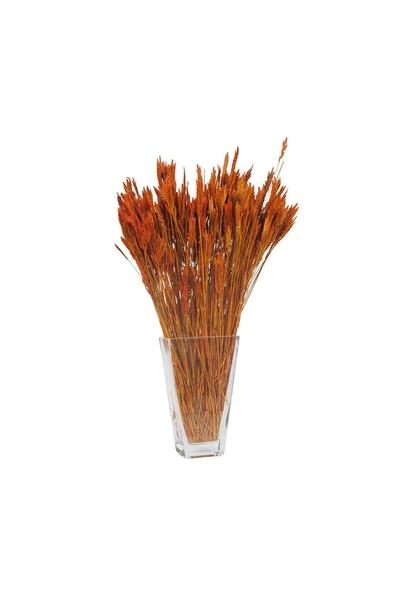 Kurutulmuş Spigadoro Bitkisi Turuncu Renk 55cm 1 Adet