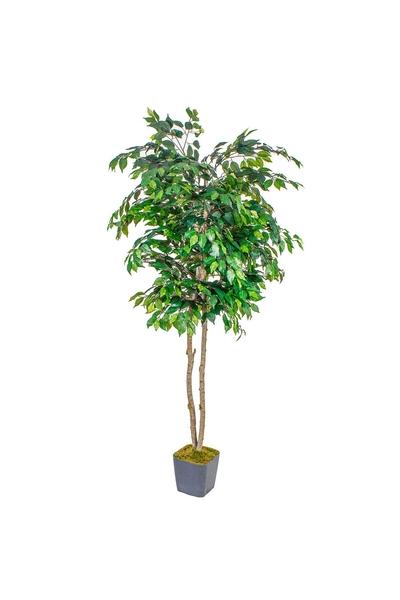 Yapay Ficus Ağacı Yeşil Renk 200cm 1Adet