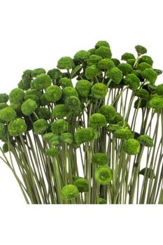 Yapay Botao Bitkisi Yeşil Renk 48cm 1 Adet - Thumbnail