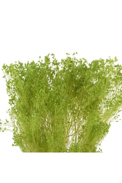 Yapay Brooms Bitkisi Yeşil Renk 45cm 1 Adet