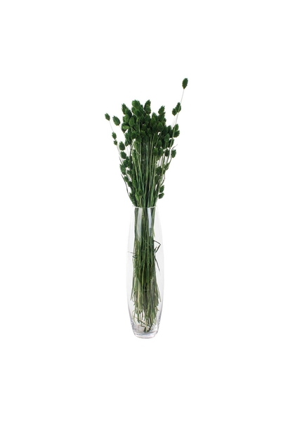 Yapay Phalaris Bitkisi Yeşil Renk 80cm 1 Adet