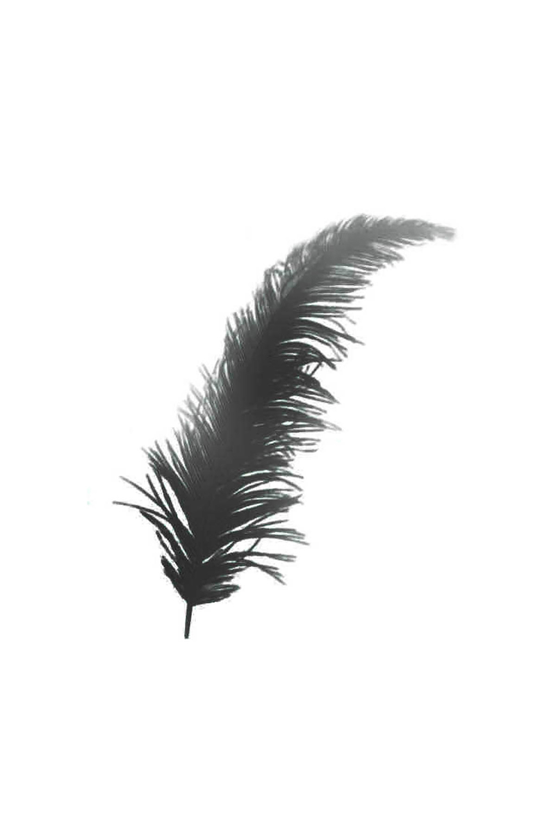 Dekoratif Tüy Siyah 4x15 cm 100 Adet